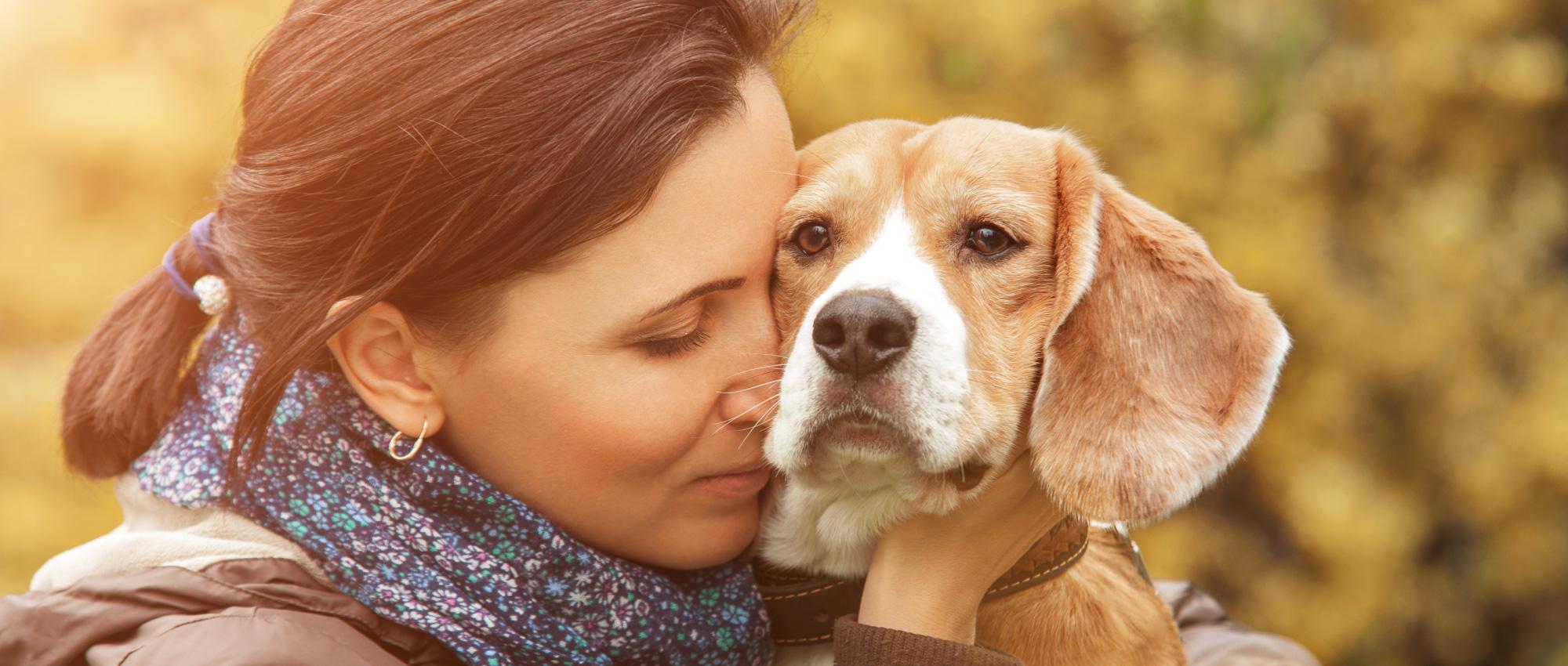 Leishmaniosis en perros: Cómo prevenir y tratar