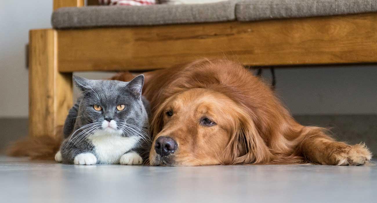 Coronavirus y animales de compañía: Clínicas veterinarias seguirán abiertas