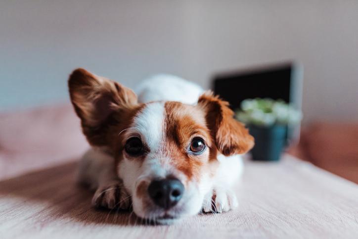 Verbena de San Juan con mascotas: ¡Toma medidas a tiempo!